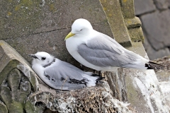 9th-July-Phoenix-House-Tyne-Kittiwakes-1-tw
