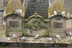 Tyne-KIttiwakes-nesting-Phoenix-House-2019