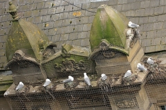 Tyne-Kittiwakes-Phoenix-House-2019-b
