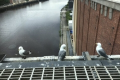 Steven-Ward-Baltic-Kittiwakes-5-June-19