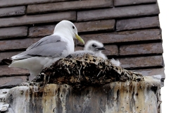 12th-July-2020-Tyne-Kittiwakes-Newcastle-Quayside-1-tw-1