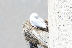 Vermont-Hotel-Kittiwakes-12-May-19