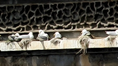 Railway-Bridge-Kittiwakes-Newcastle-diaryn