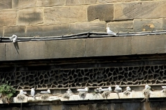 Railway-Bridge-Kittiwakes-Newcastle-slider-n