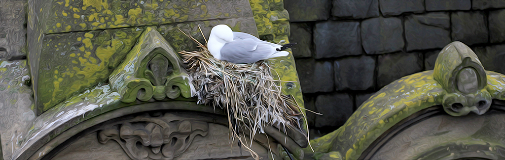 Tyne Kittiwakes nesting on Phoenix House