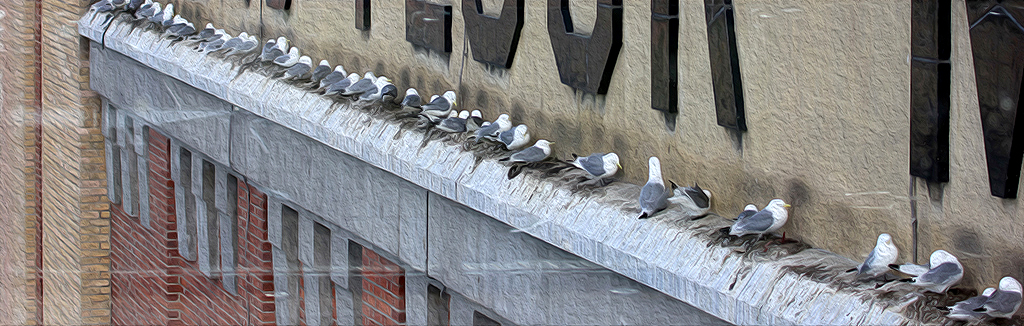 Kittiwakes nesting on the Baltic Centre for Contemporary Art