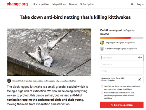 A petition to take down anti-bird netting on Newcastle Quayside that was trapping Tyne Kittiwakes